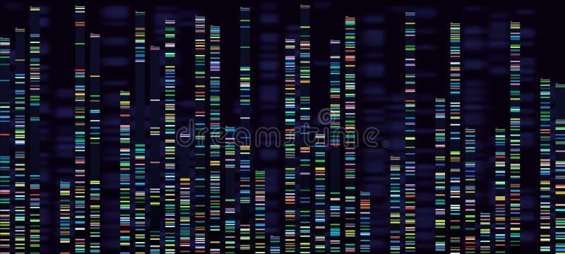 Генное визуализирование анализа Геномы ДНК sequencing, дизоксирибонуклеиновая кисловочная генетическая карта и последовательность иллюстрация вектора