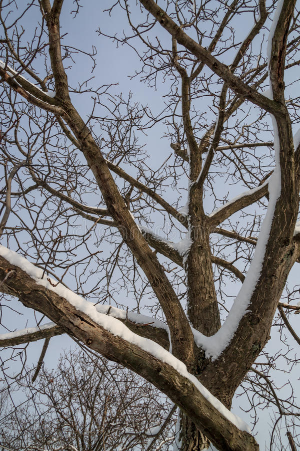 Геометрия снега стоковые фотографии rf