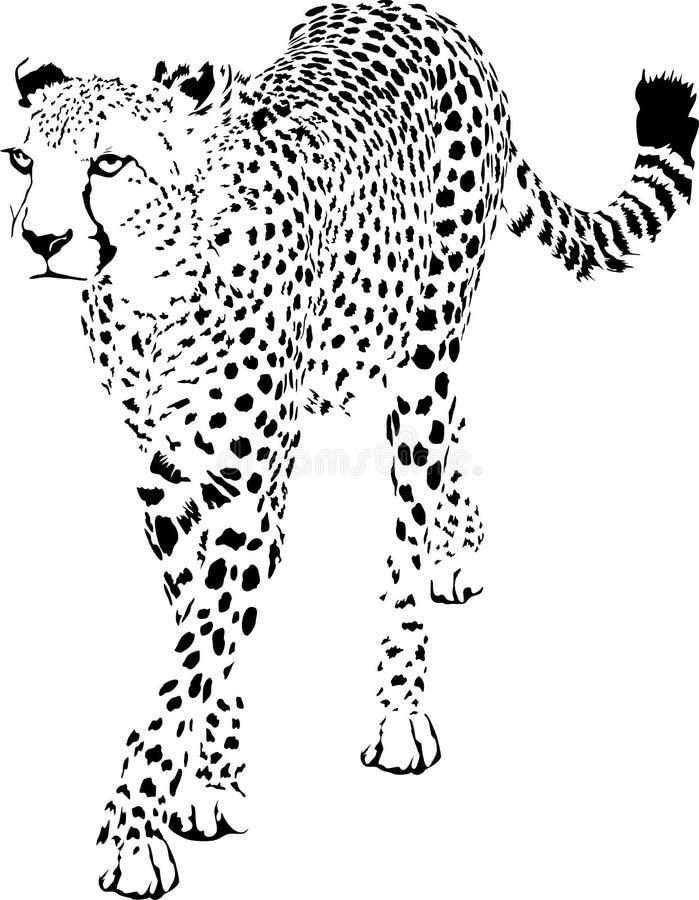 Гепард иллюстрация штока