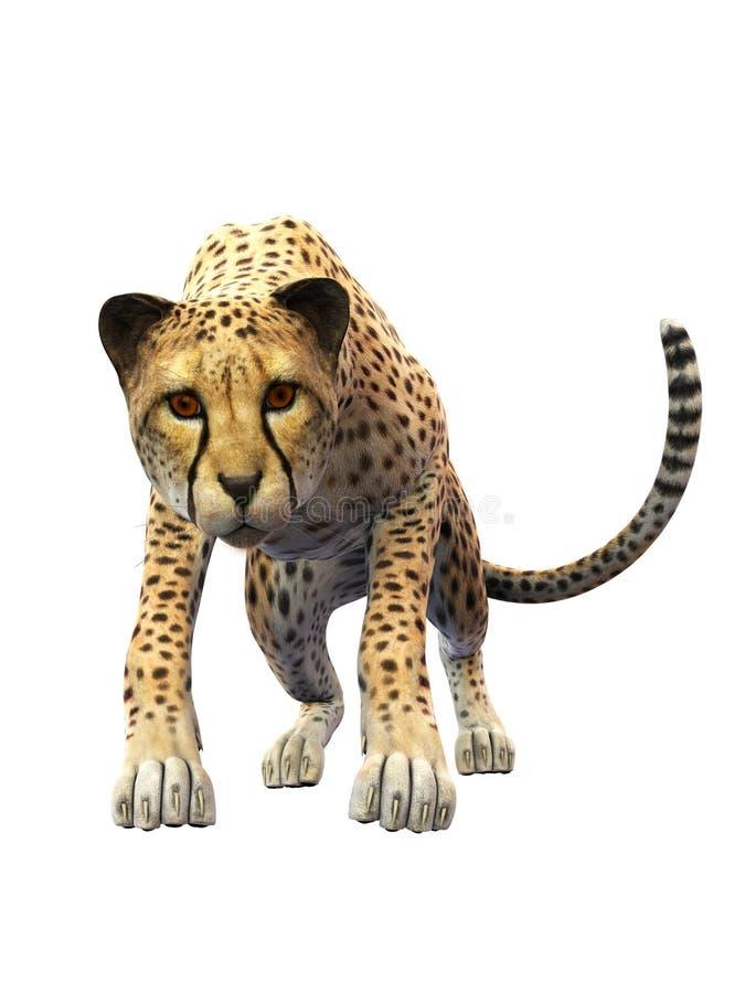 Программа гепард а скачать