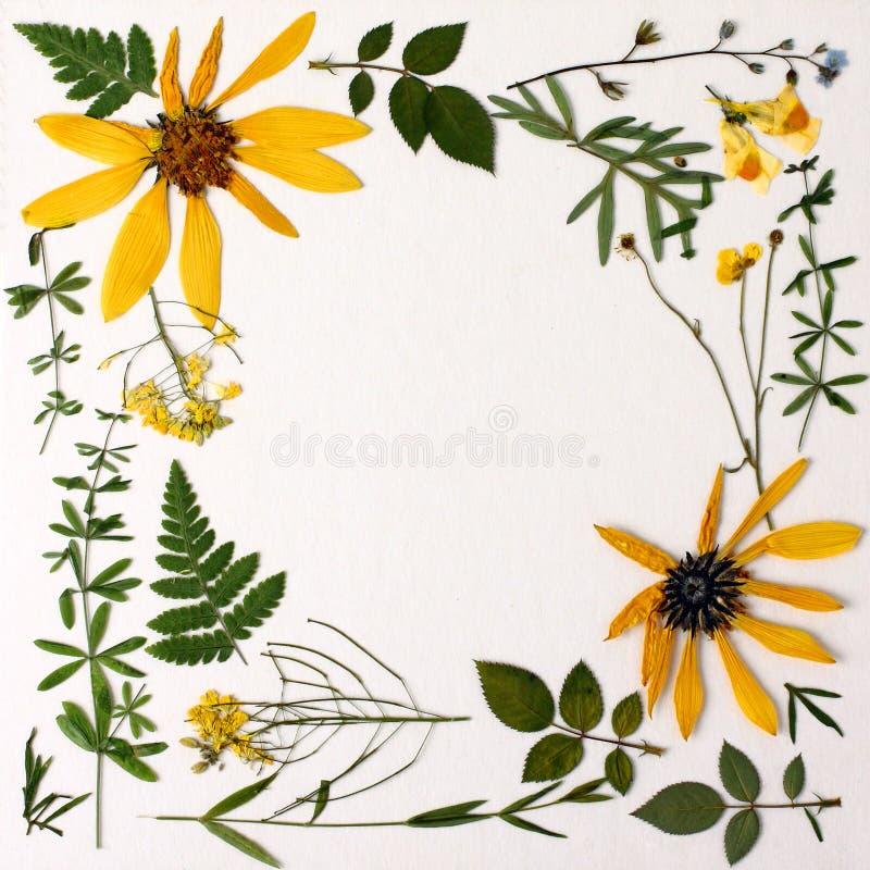 Гербарий с полевыми цветками, ветвями, листьями Ботаника на белой предпосылке, открытка стоковые фото