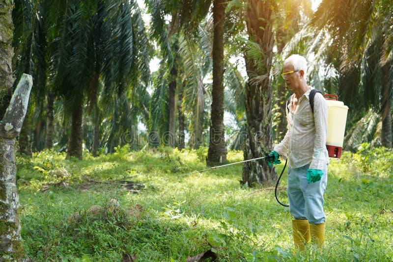 Гербициды работника масличной пальмы распыляя на плантации стоковое фото rf