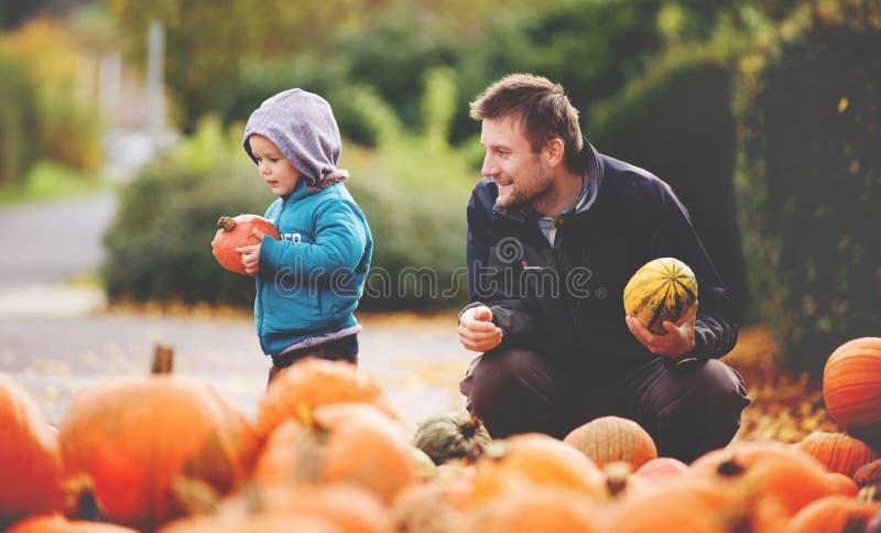 ГЕРМАНИЯ, ПЛОХОЕ MERGENTHEIM, октябрь 2017: Отец и сын выбирают тыквы хеллоуина стоковые изображения