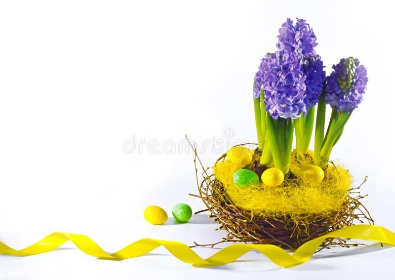 Гиацинты с пасхальными яйцами на белой предпосылке стоковое изображение rf