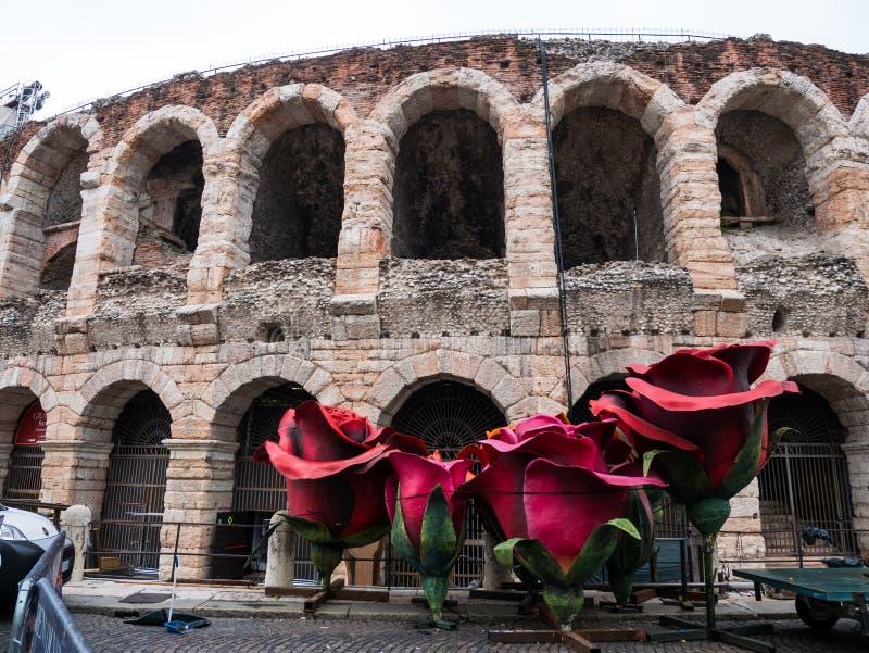 Гигантские красные розы перед ареной Вероны, символом любов, идеальным для того чтобы представить концепцию любов стоковая фотография
