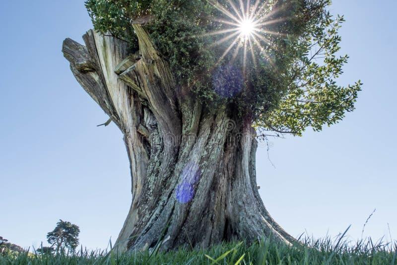 Гигантское дерево сидит самостоятельно в пустом ландшафте стоковое изображение
