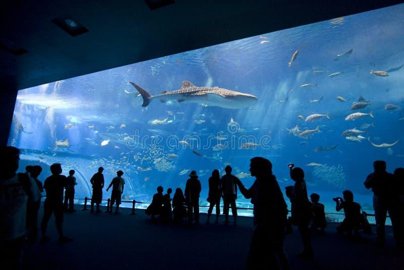 гигант аквариума стоковые изображения rf