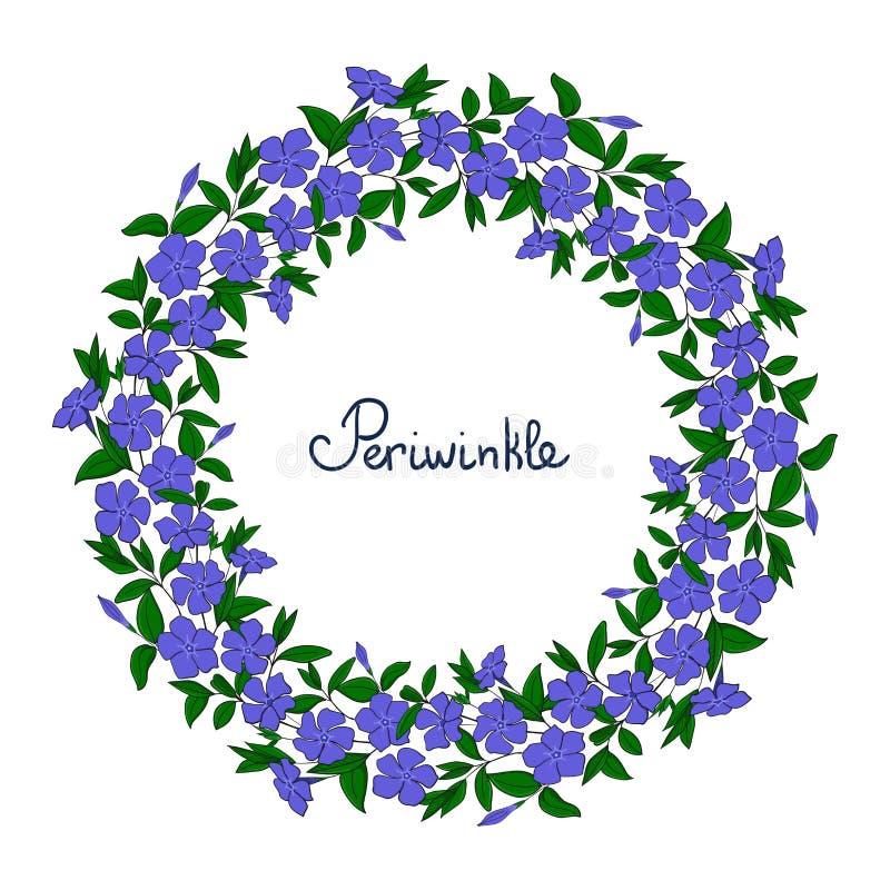 Гирлянда с голубыми цветками барвинка Элемент для барвинка венка дизайна картина цветения catharanthus стоковое фото rf