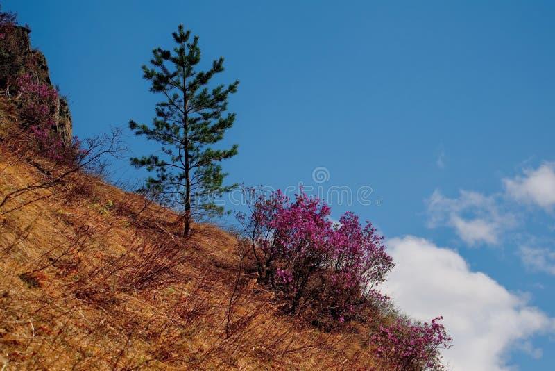 Главным образом фестиваль весны в горах Altai стоковое изображение