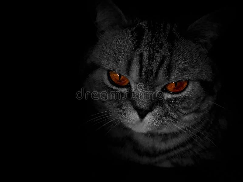 Глаза имбиря в темноте стоковые фотографии rf
