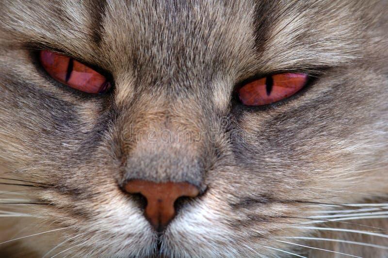 глаза кота красные стоковые изображения rf