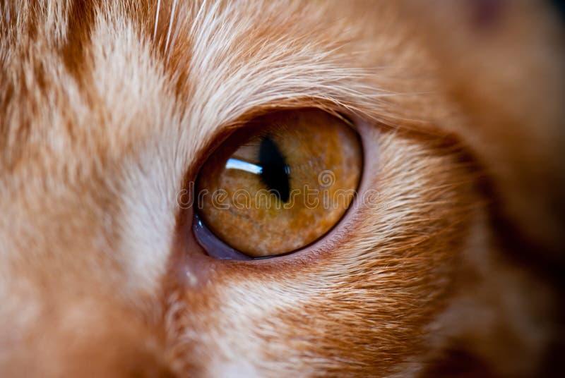 глаза кота s стоковое изображение rf