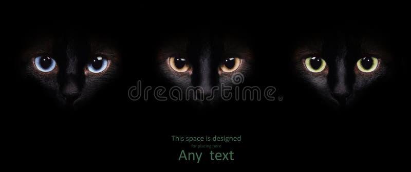 Глаза сиамского кота в темноте стоковое изображение
