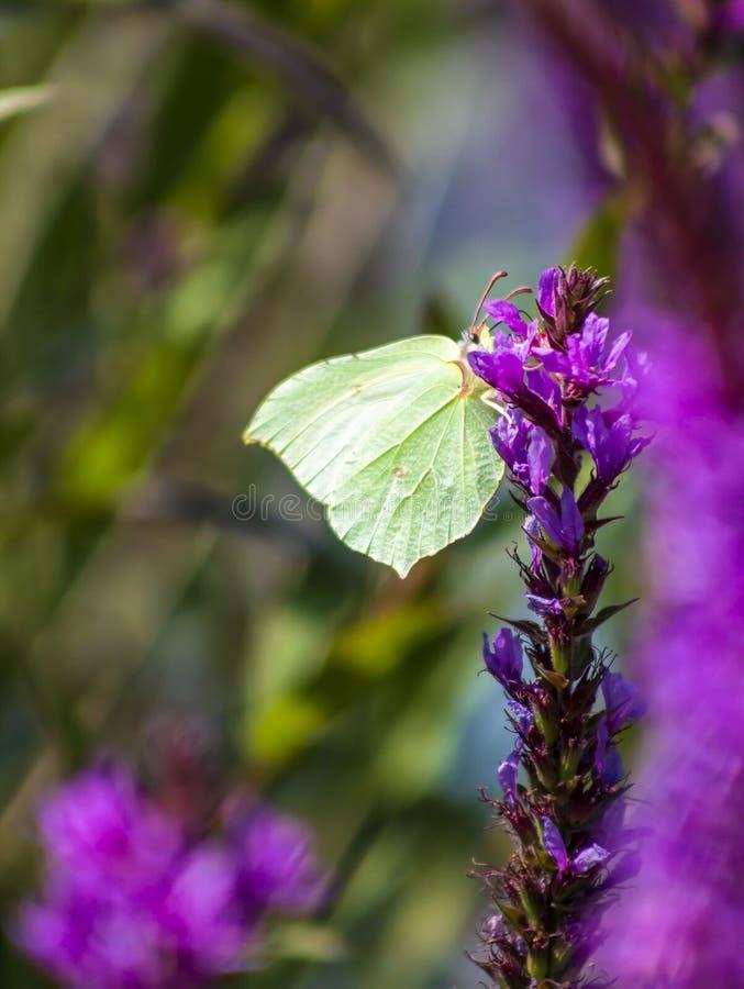 Глаз бабочки стоковое фото