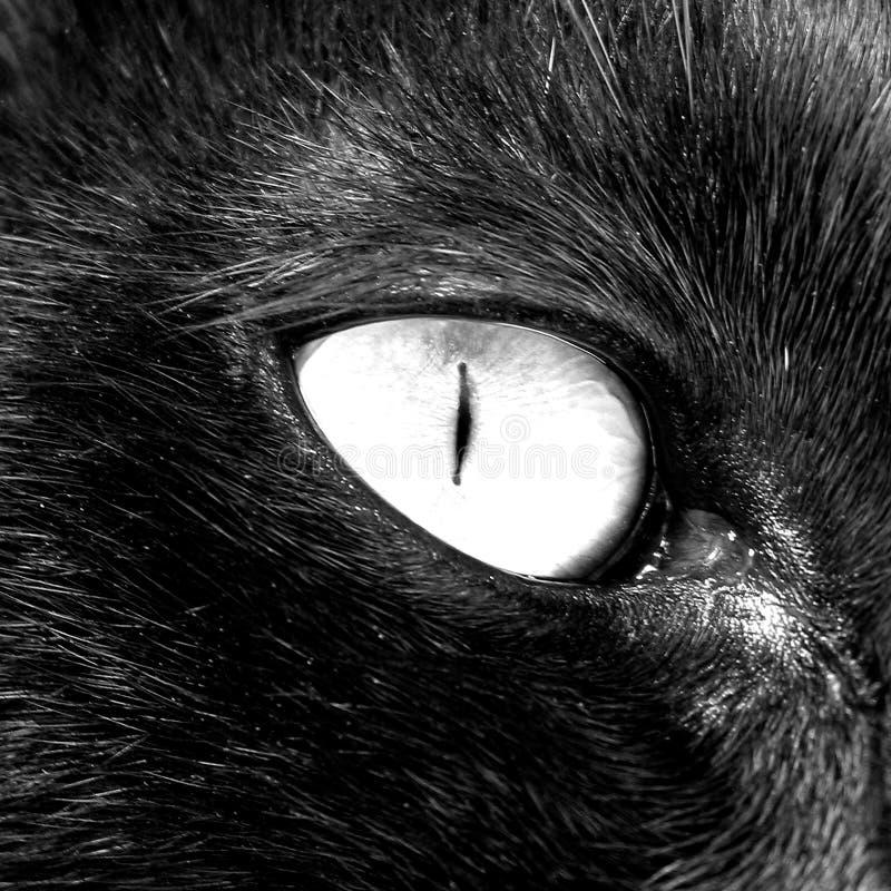 глаз кота стоковые изображения rf