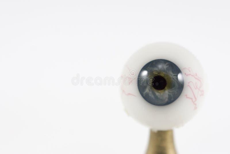 глаз одиночный стоковое изображение rf