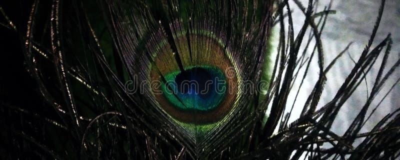 Глаз/перо павлина стоковые фотографии rf