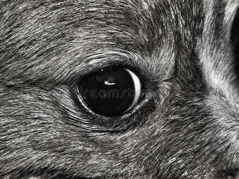 Глаз собаки стоковая фотография rf