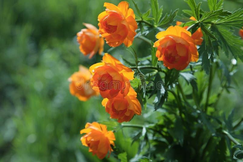 глобус цветка стоковые фото