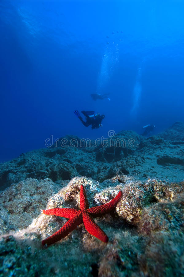 глубокая вода starfish водолаза стоковая фотография