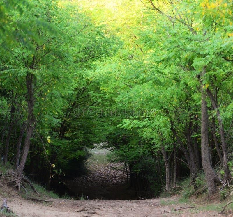 глубокая дорога леса стоковые изображения
