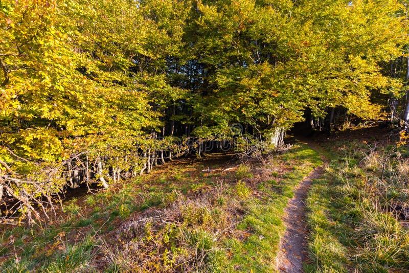 Глубокая осень майны следа леса красит перемещение Словении стоковое изображение rf