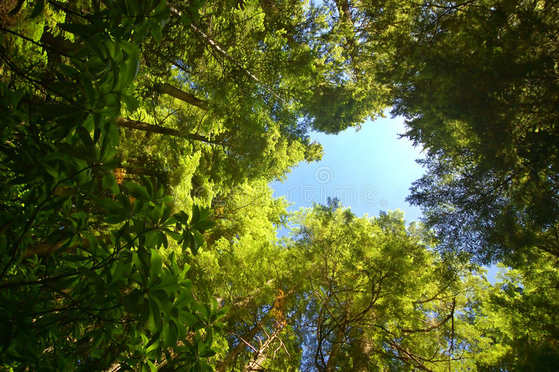 Download глубокая пуща стоковое фото. изображение насчитывающей green - 1179494