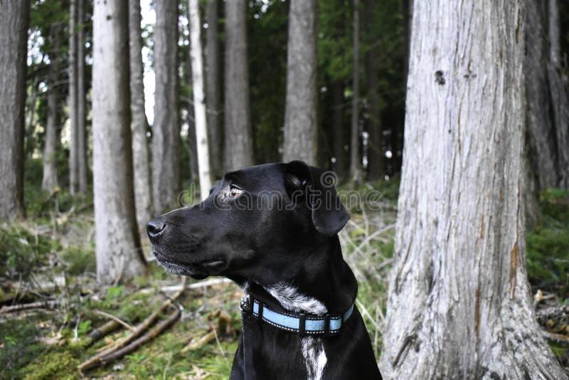 Глубокие мысли в лесе стоковые фотографии rf