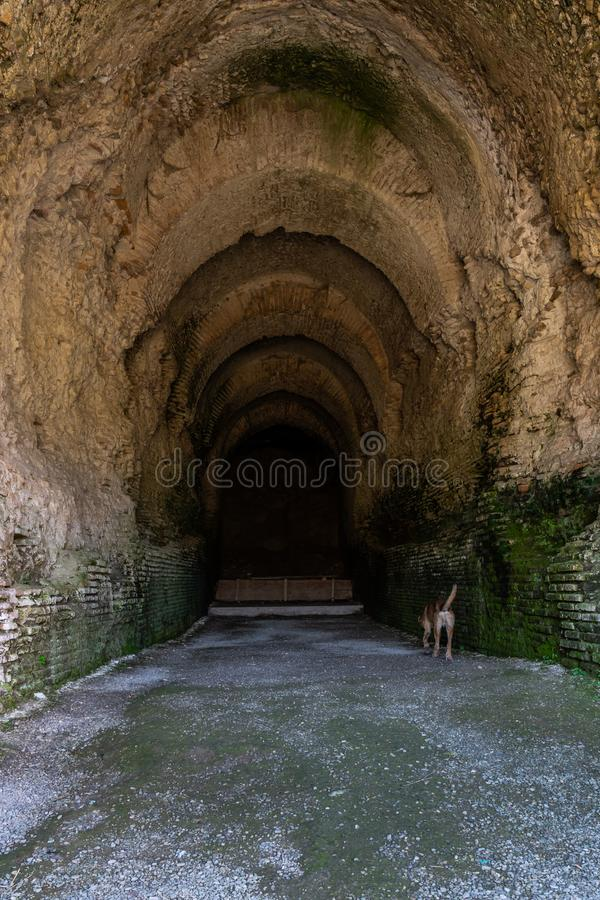 Глубокий старый влажный римский тоннель кирпича с гравием и собака идя внутрь стоковое фото rf