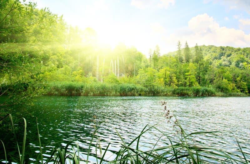 Download глубокое озеро пущи стоковое фото. изображение насчитывающей хорватия - 6869498