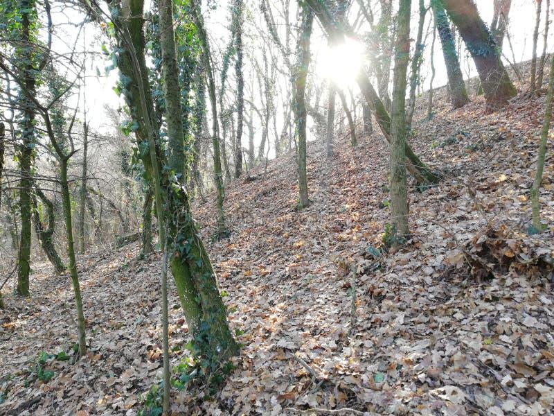Глубоко в древесинах, лучи зимы солнца выходя сквозь отверстие деревья стоковое изображение rf