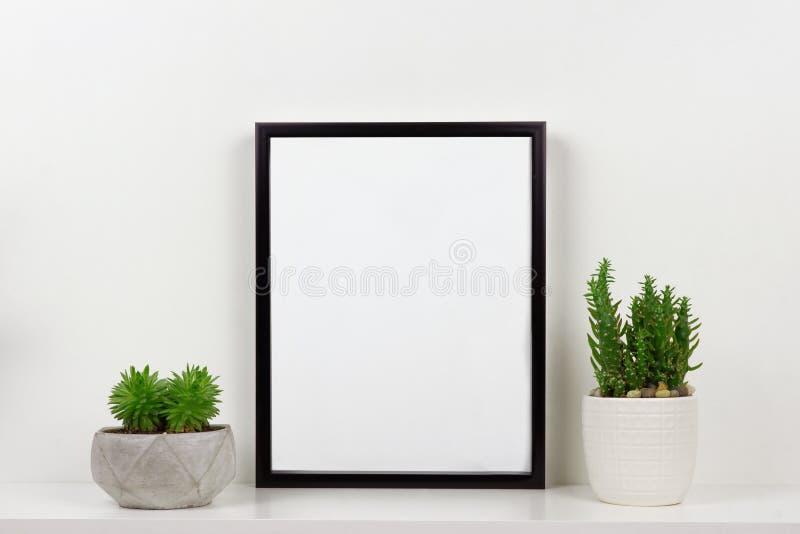Глумитесь вверх по черной рамке против белой стены с суккулентными заводами на белой полке стоковые изображения