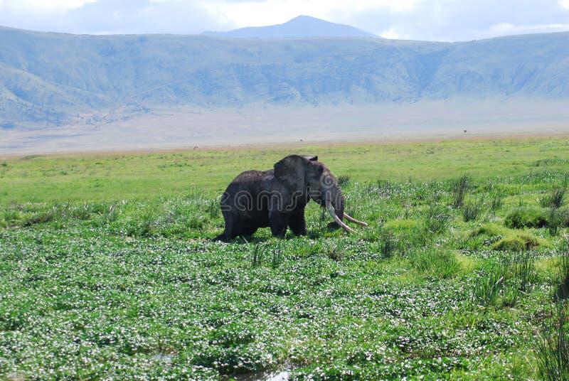 глушь слона стоковые изображения rf