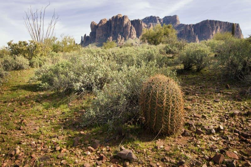 глушь тропки пустыни стоковые изображения rf