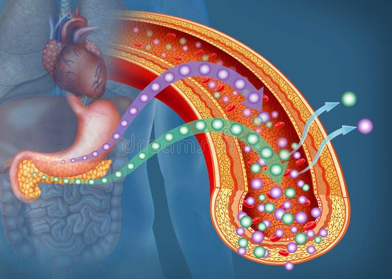 Глюкоза и инсулин в диабете, описательная иллюстрация иллюстрация вектора