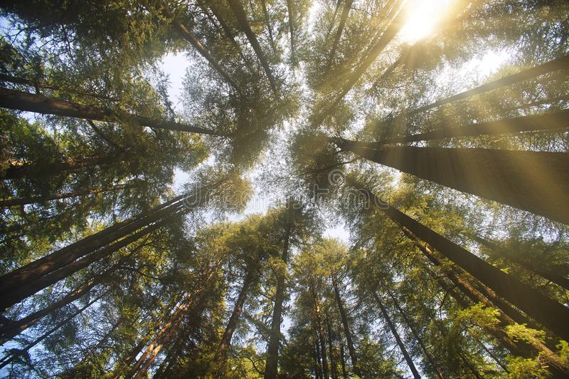 Глядя на небо сквозь деревья стоковое фото rf