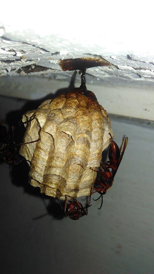 гнезда пчел стоковая фотография