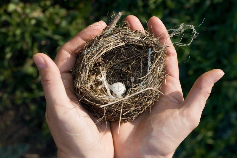 гнездй птицы малое стоковая фотография rf
