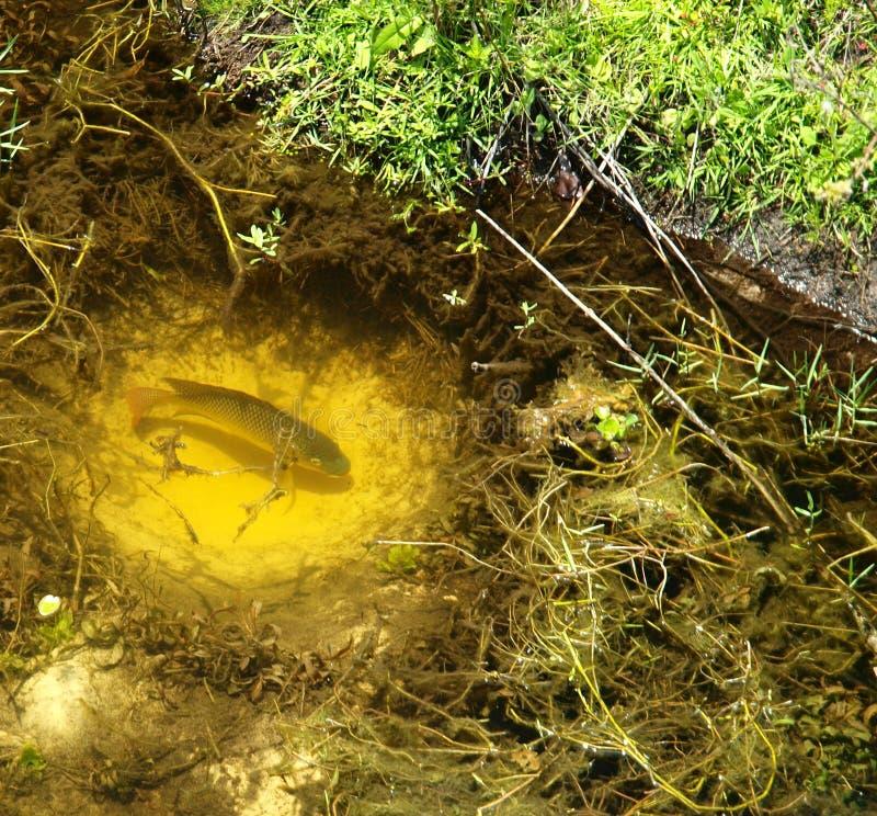 гнездй рыб стоковая фотография rf