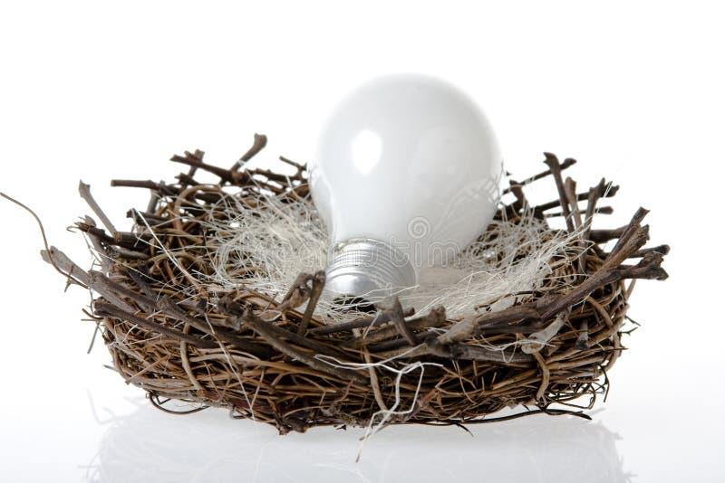 гнездй lightbulb стоковые фотографии rf