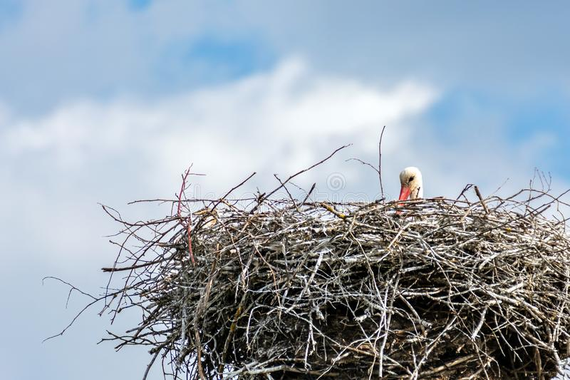 Гнездо аиста стоковая фотография