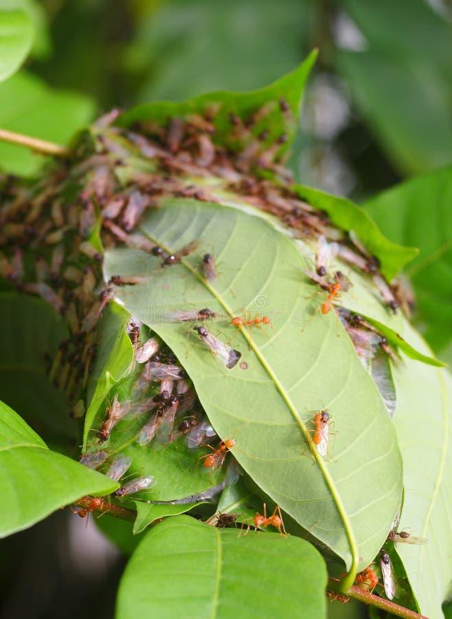 Гнездо муравья стоковое изображение rf