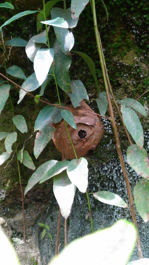 Гнездо оси стоковое изображение