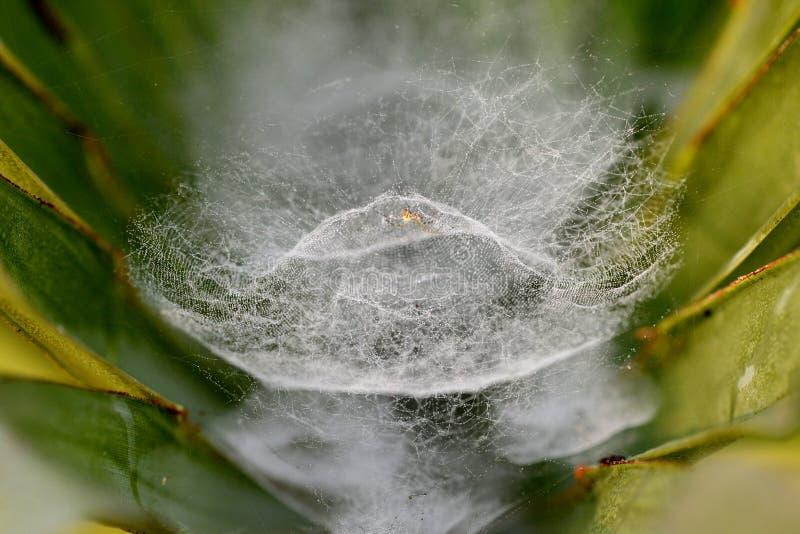 Гнездо паука стоковая фотография