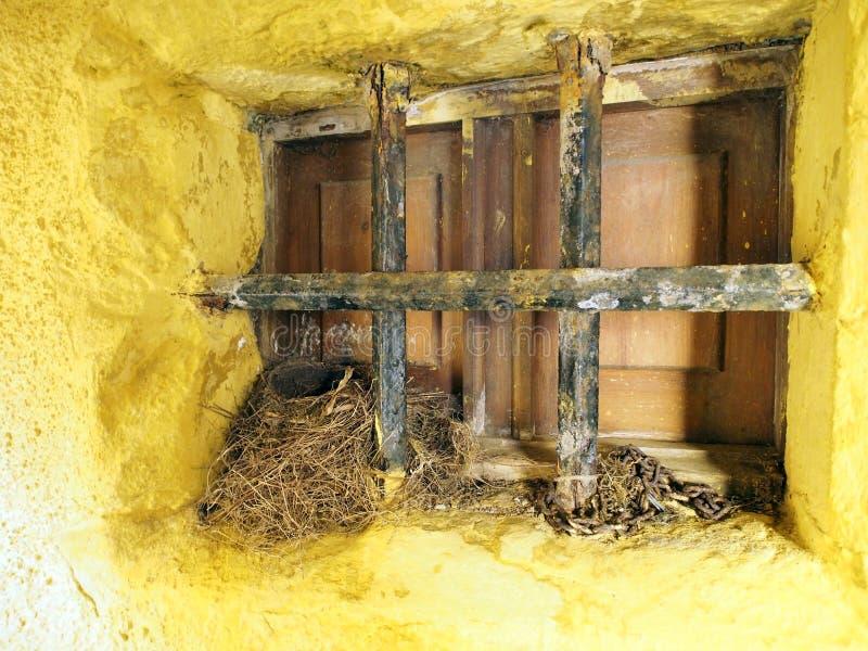 Гнездо птицы стоковые фото