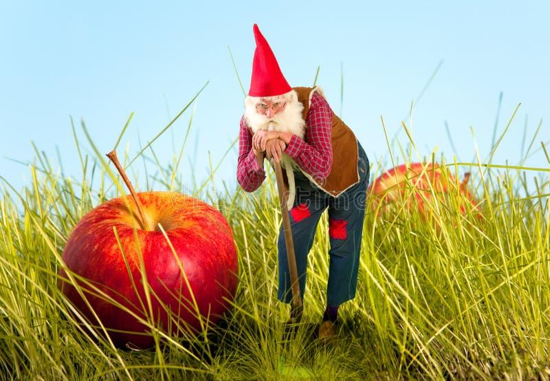 Гном и яблоко сада стоковые фото