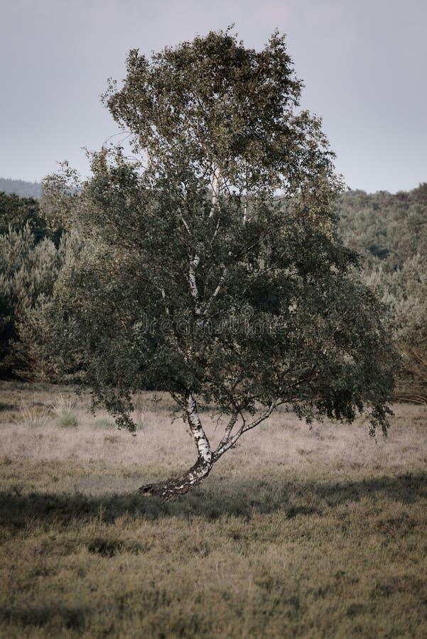 Гнуть дерево стоковое фото rf