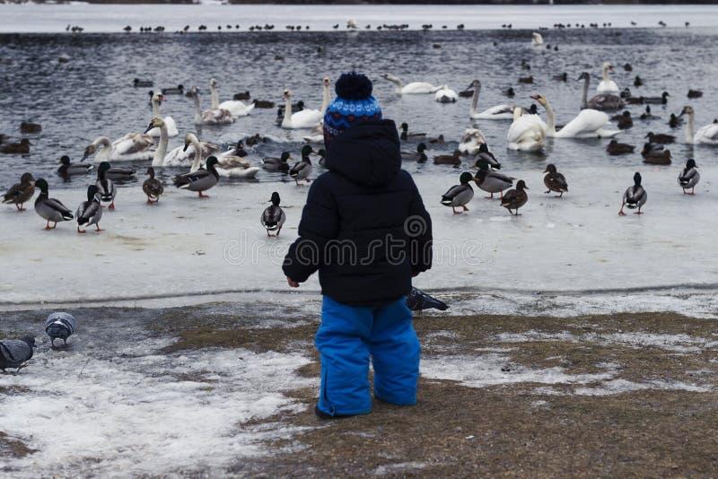 2 года малыша подавая одичалые птицы на озере стоковое фото rf