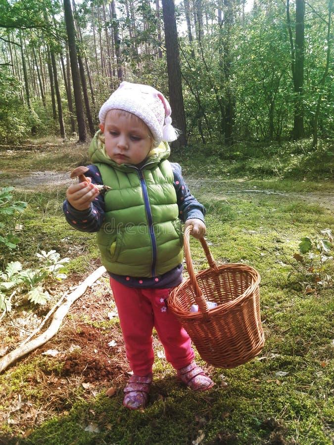 2 года старой девушки находя грибы в лесе стоковая фотография rf