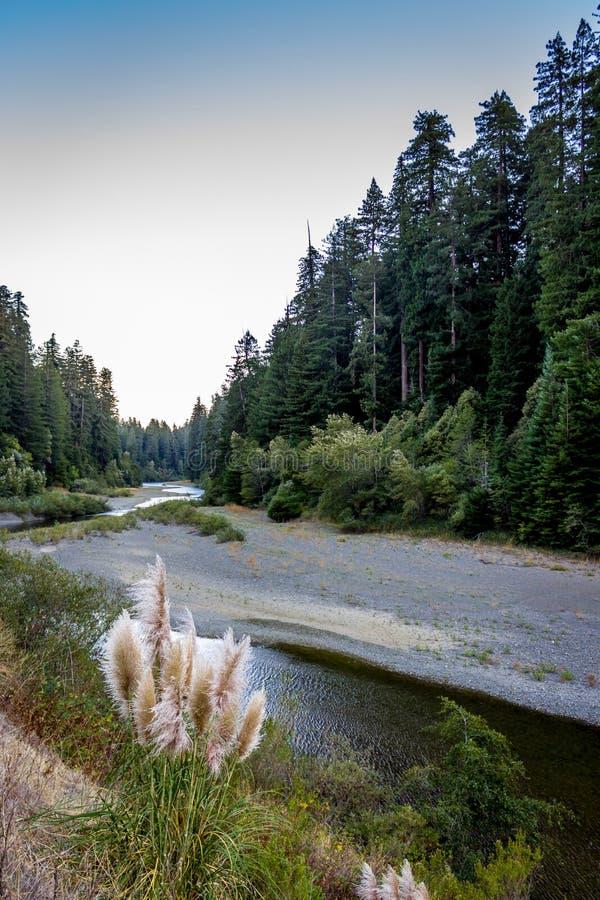 Год засухи реки угря стоковое фото